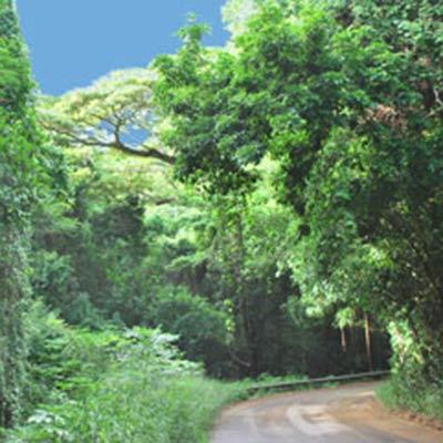 St. Croix's rain forest