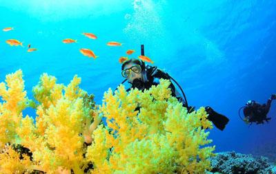 Scuba Diving and PADI Dive Training St Croix US Virgin Islands